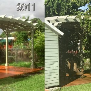 Arched Pergola Kits (Options: 10' L x 20' Arc W, Redwood, Unattached, Electrical Wiring Trim Kit for 2 posts, Arched Roof with Lattice Panels, 4 Post Anchor Kit for Stone, No Ceiling Fan Base, No Privacy Panels, No Curtain Rods, 9' Post Height, White Primer Option). This pergola was assembled and painted in S. Florida in 2011. The 2017 photo shows how the paint has mostly held up without any maintenance. It is shown here so customers in tough weather areas that chose to paint their shade structures have a good idea how long the paint will hold up before needing retouching (6 to 8 years).