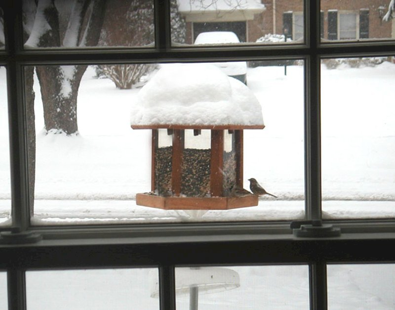 Aviary Oasis Birdfeeder (Options: Old-Growth Redwood, XW Roof Eaves, Transparent Premium Sealant).