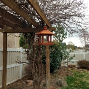 Aviary Oasis Birdfeeder (Options: Old-Growth Redwood, XW Roof Eaves, Transparent Premium Sealant).  Photo Courtesy of Marilyn Brooks of Star, Idaho.