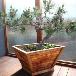 "Bonsai Planter (Options: 12"" at base, 22"" at top, 12"" H, Mature Redwood, Standard Base, No Growing Vegetables, Transparent Premium Sealant)."