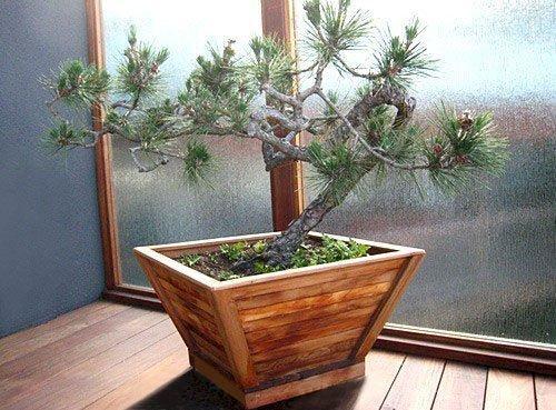 "Bonsai Planter (Options: 12"" at base, 22"" at top, 12"" H, Mature Redwood, Standard Base, No Growing Vegetables, Transparent Premium Sealant)."