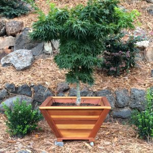 "Bonsai Planter (Options: 12"" at base, 22"" at top, 12"" H, Redwood, Standard Base, No Growing Vegetables, Transparent Premium Sealant). Photo Courtesy of Thomas L. of Greenbrae, CA"