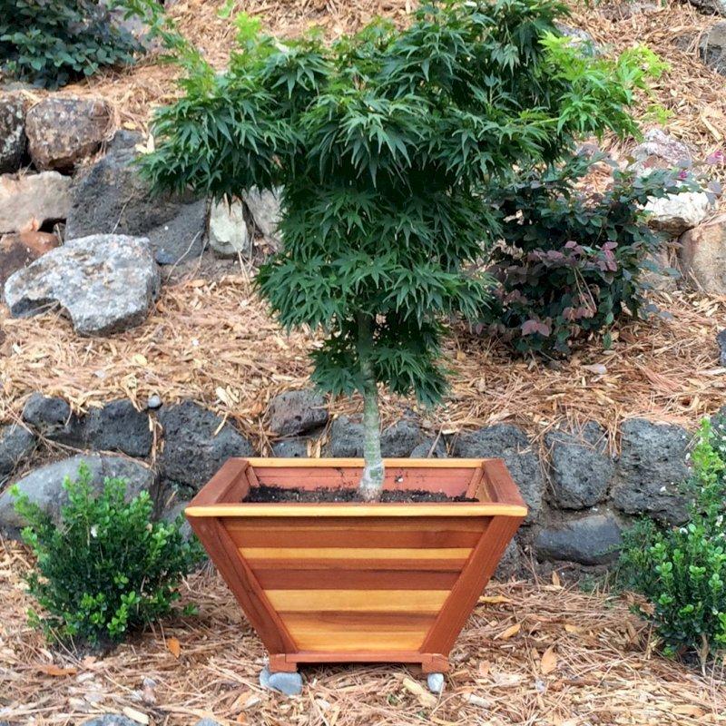 "Bonsai Planter (Options: 12"" at base, 22"" at top, 12"" H, California Redwood, Standard Base, No Growing Vegetables, Transparent Premium Sealant). Photo Courtesy of Thomas L. of Greenbrae, CA"