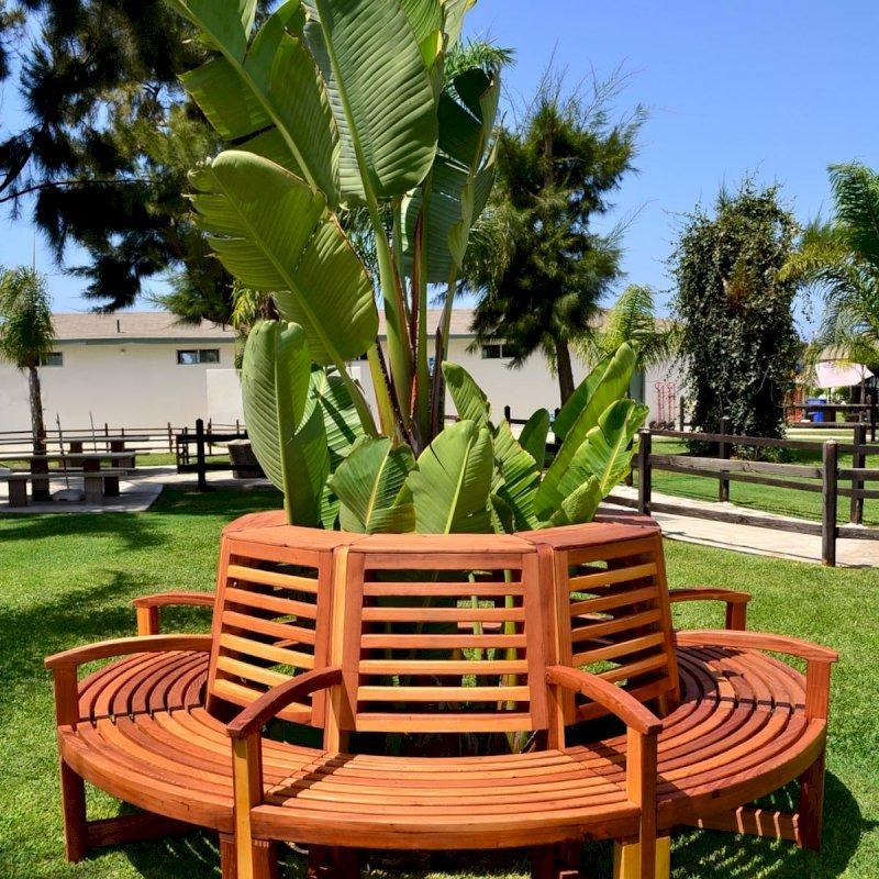 Luna Tree Bench (Options: 8 1/2 ft, California Redwood, Beverage Ledge, No Cushion, No Engraving, Transparent Premium Sealant).