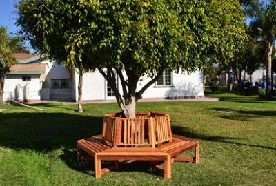 Memorial Natural Redwood Tree Bench