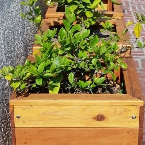 "Mendocino Planters (Options: 18""L, 18""W, 18""H, Redwood, With Casters, No Trellis, Interior of Planter Without Sealant, Transparent Premium Sealant). Photo Courtesy of D. Finkelstein of L.A., CA."
