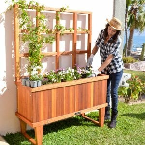 "Napa Planter (Options: 48"" L x 18"" W x 18"" H, Redwood, 12-inch stand, 3' tall Trellis Kit, No Growing Vegetables, Transparent Premium Sealant). Photo: Courtesy of the Estero Beach Resort, Ensenada, México and Ms. Yesenia Veliz of Ensenada, BC."
