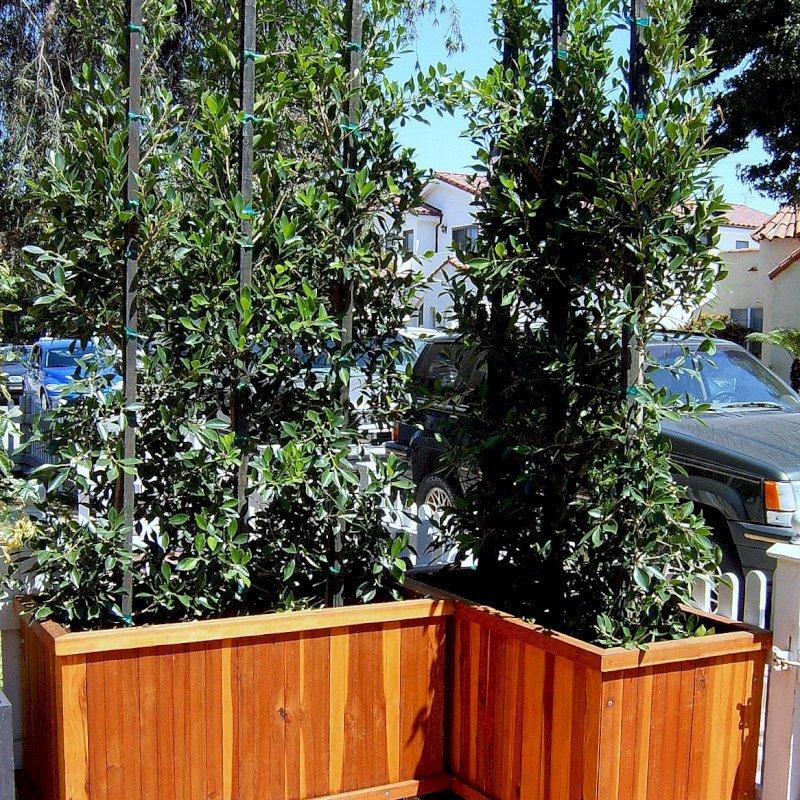 "Napa Planter (Options: 48"" L x 18"" W x 18"" H, Mature Redwood, No Base, Casters (CUSTOM OPTION), No Trellis, No Growing Vegetables, Transparent Premium Sealant)."