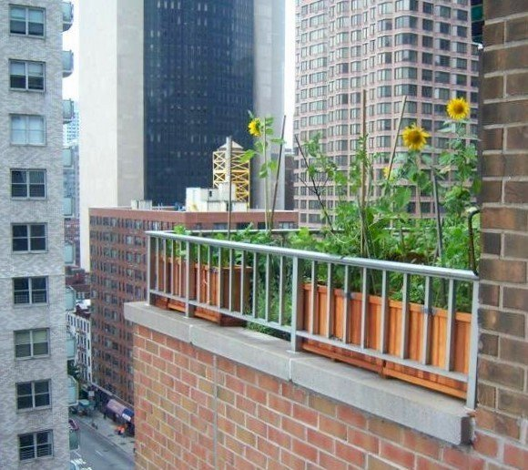 Napa Planters over Manhattan (Options: Mature Redwood, 15 inches tall, various lengths). Photo Courtesy of Scott and Meenakshi Baker of New York City.
