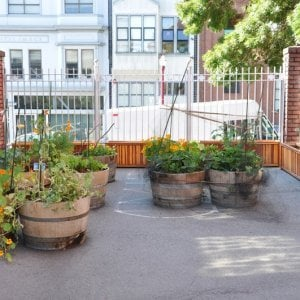 "Napa Planters (Options: 60"" L x 18"" W x 24"" H, Redwood, Add 1 inch feet, No Trellis, No Growing Vegetables, Transparent Premium Sealant). Photo Courtesy of School John Yehall Chin of San Francisco."