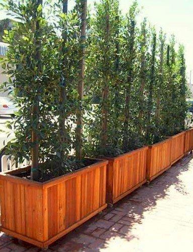 "Napa Planters (Options: 48""L x 24""W x 24""H, California Redwood, With Casters, No Trellis, No Growing Vegetables, Transparent Premium Sealant)."