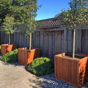 "Napa Planters (Options: 32"" L x 32"" W x 29"" H, Mature Redwood, With 1-inch feet, No Trellis, No Growing Vegetables, Transparent Premium Sealant, With Galvanized Liners per Custom Request). Photo Courtesy of Michael & Wendy H. of San Ramon, CA."