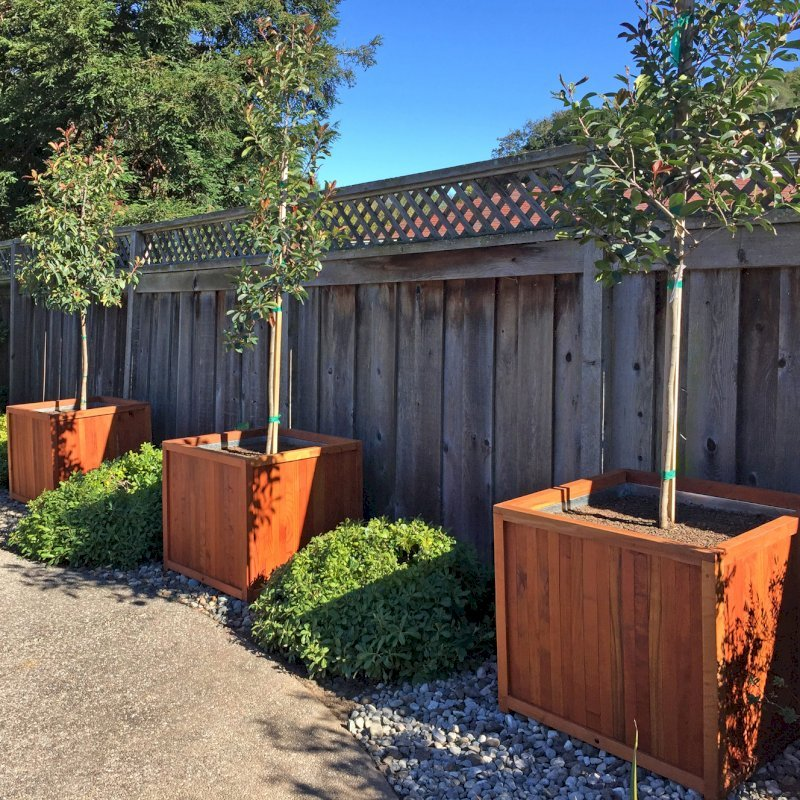 """Napa Planters (Options: 32"""" L x 32"""" W x 29"""" H, Mature Redwood, With 1-inch feet, No Trellis, No Growing Vegetables, Transparent Premium Sealant, With Galvanized Liners per Custom Request). Photo Courtesy of Michael & Wendy H. of San Ramon, CA."""
