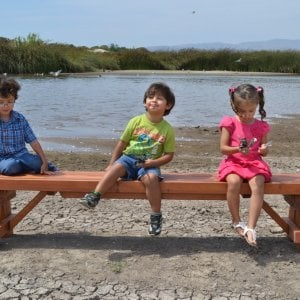 Parquet Bench (Options: 8 ft L x 17 3/4 inches W x 18 1/2 inches H, Old-Growth Redwood, No Cushion, No Engraving, Transparent Premium Sealant). Photo courtesy of Hernandez Family.