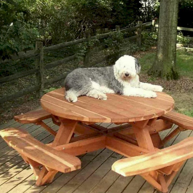 Olaf on his Round Picnic Table (Options: 4.5' Diameter, Attached Benches, Redwood, Standard Tabletop, No Lazy Susan, No Umbrella Hole, Transparent Premium Sealant).