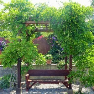 "Small Pergola (Options: 6' x 8', Garden Type, Standard-Thickness Timbers, Old-Growth Redwood, Open Roof with Slats at 18"", Rafters at 18"", Lengthwise Roof Support Timbers, 9 ft Post Height, 4-Post Anchor Kit for Concrete, No Ceiling Fan Base, No Privacy Panels, No Curtain Rods, Cherry Stain Premium Sealant). Photo Also Shows a Heritage Bench Under the Pergola. Photo Courtesy of Aileen Knowles of San Diego, CA."