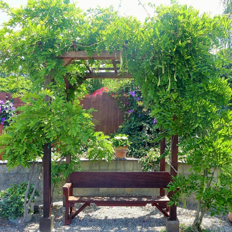 """Small Pergola (Options: 6' x 8', Garden Type, Standard-Thickness Timbers, Old-Growth Redwood, Open Roof with Slats at 18"""", Rafters at 18"""", Lengthwise Roof Support Timbers, 9 ft Post Height, 4-Post Anchor Kit for Concrete, No Ceiling Fan Base, No Privacy Panels, No Curtain Rods, Cherry Stain Premium Sealant). Photo Also Shows a Heritage Bench Under the Pergola. Photo Courtesy of Aileen Knowles of San Diego, CA."""