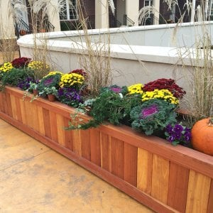 "Sonoma Planter (Options: 120"" L x 30"" W x 24"" H, Redwood, No Sitting Ledge, Add 1-inch feet, No Trellis, No Growing Vegetables, Transparent Premium Sealant). Photo Courtesy of Roxanne Giordano of New Rochelle, NY."