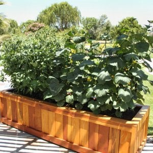 "Sonoma Planter (Options: 96"" L, 30"" W x 24"" H, Redwood, No Seating Ledge, 1-inch Feet, No Trellis, No Growing Vegetables, Transparent Premium Sealant). Photo Courtesy of Samuel P. of Atascadero, CA."
