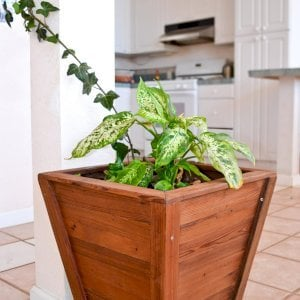 "Tapered Planter (Options: 15"" Square Base x 21"" Square Top x 18""H, Mature Redwood, 3/4-inch feet, Seal interior and exterior of box, Transparent Premium Sealant). and Redwood Wine Rack."
