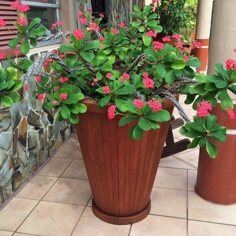 Vase Planters (Options: 15