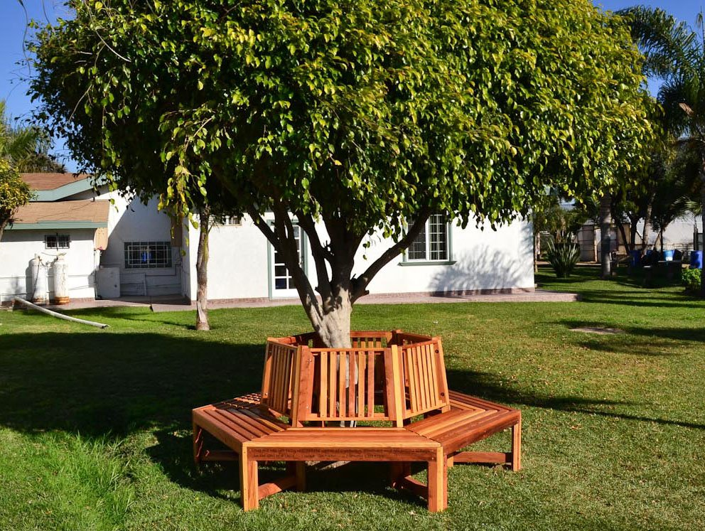 memorial natural redwood tree bench custom redwood seating