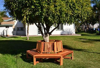 Memorial Tree Benches